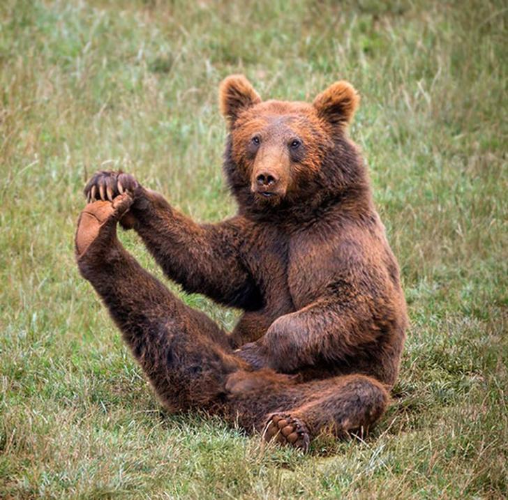 Birbirinden sevimli hayvanlardan yoga pozisyonlari_ 42