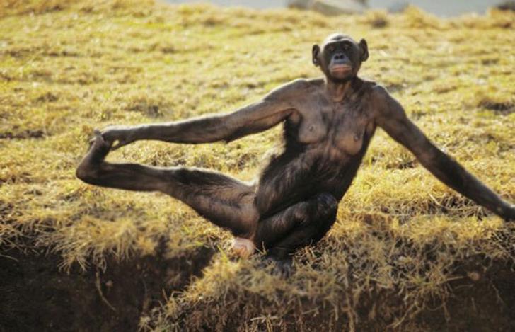 Birbirinden sevimli hayvanlardan yoga pozisyonlari_ 44