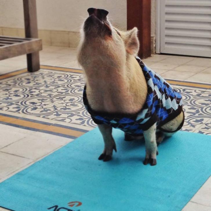 Birbirinden sevimli hayvanlardan yoga pozisyonlari_ 48