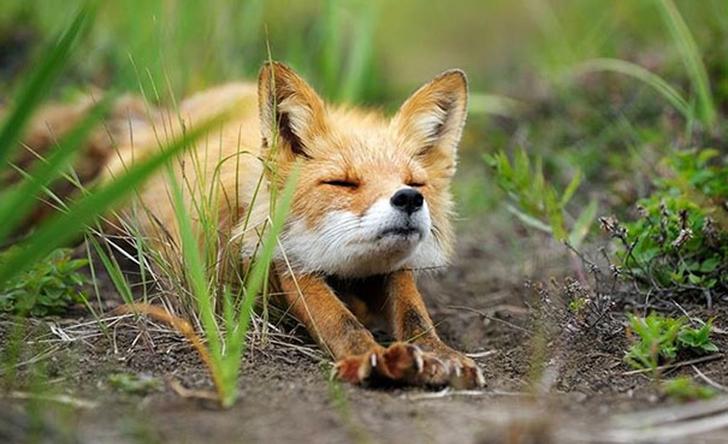 Birbirinden sevimli hayvanlardan yoga pozisyonlari_ 5
