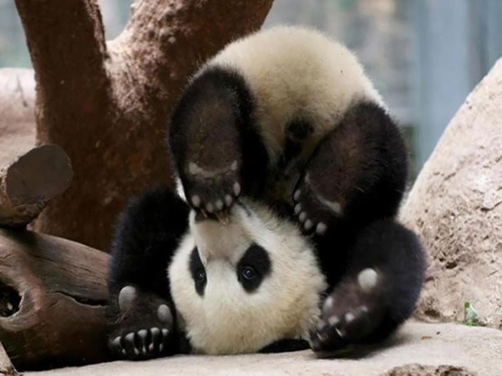 Birbirinden sevimli hayvanlardan yoga pozisyonlari_ 50