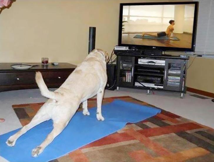 Birbirinden sevimli hayvanlardan yoga pozisyonlari_ 53
