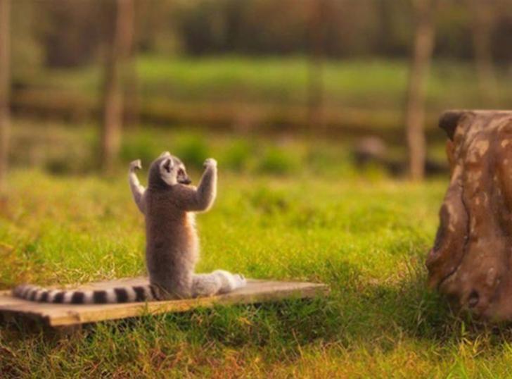 Birbirinden sevimli hayvanlardan yoga pozisyonlari_ 54
