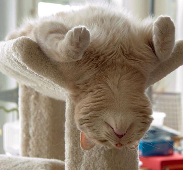 Birbirinden sevimli hayvanlardan yoga pozisyonlari_ 55