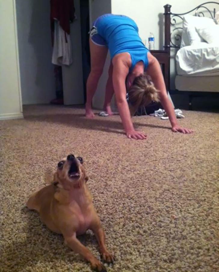 Birbirinden sevimli hayvanlardan yoga pozisyonlari_ 56