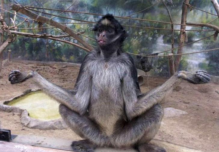 Birbirinden sevimli hayvanlardan yoga pozisyonlari_ 65