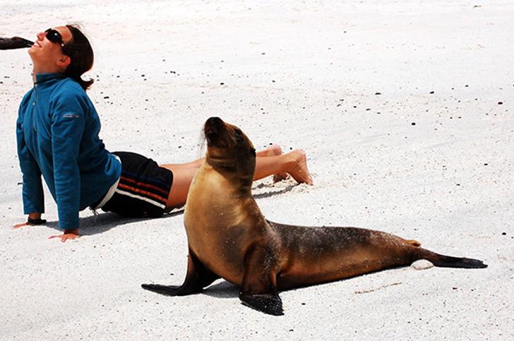 Birbirinden sevimli hayvanlardan yoga pozisyonlari_ 7