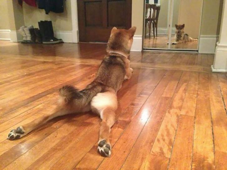 Birbirinden sevimli hayvanlardan yoga pozisyonlari_ 74