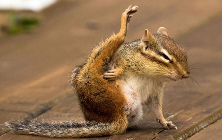 Birbirinden sevimli hayvanlardan yoga pozisyonlari_ 78