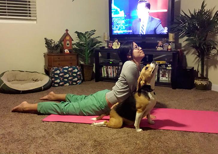 Birbirinden sevimli hayvanlardan yoga pozisyonlari_ 81