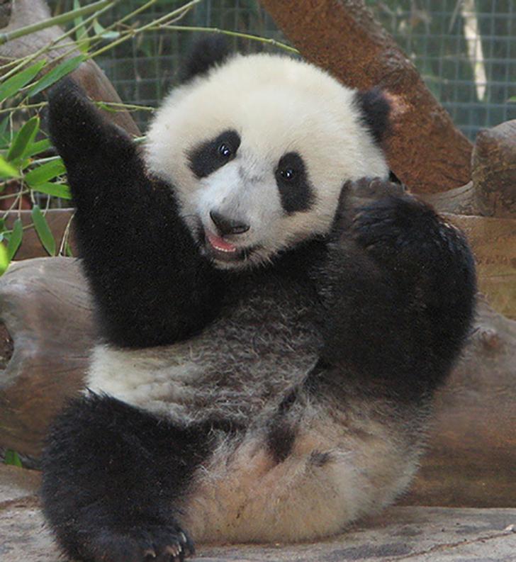 Birbirinden sevimli hayvanlardan yoga pozisyonlari_ 91
