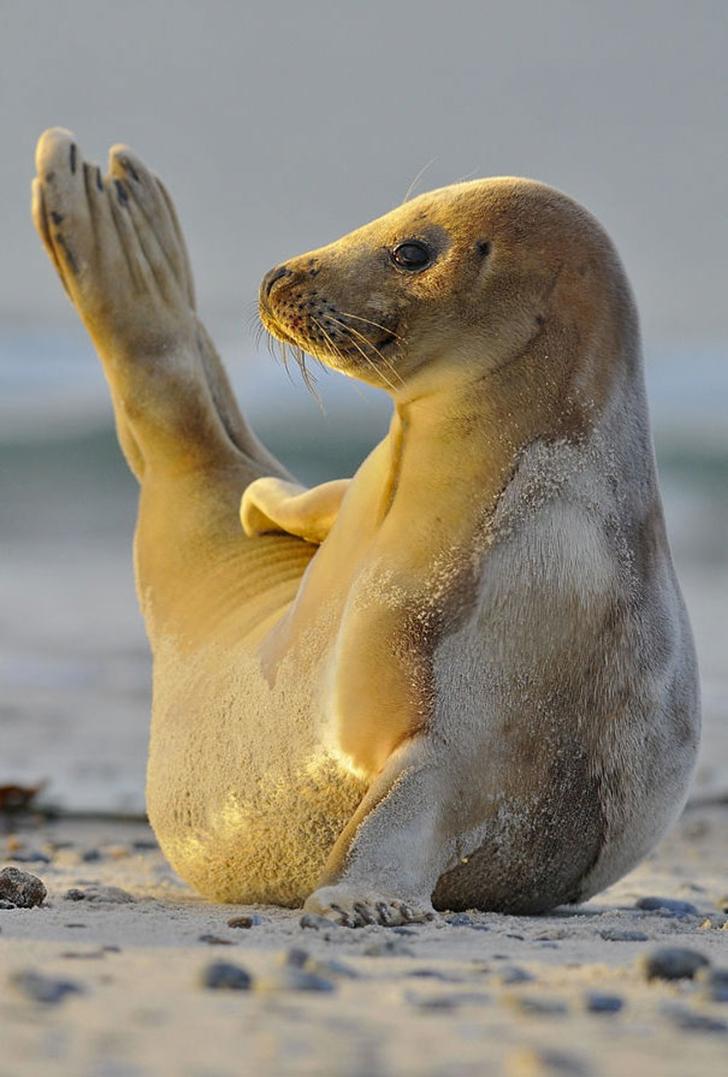 Birbirinden sevimli hayvanlardan yoga pozisyonlari_ 95