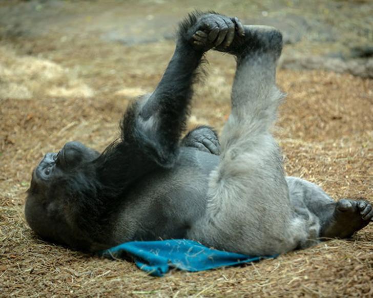 Birbirinden sevimli hayvanlardan yoga pozisyonlari_ 99