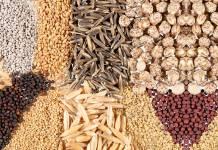 Tohumların kurumsal hırsızlığına direniş: Navdanya Hareketi