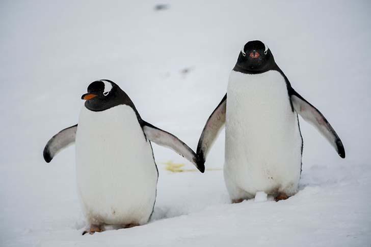 antarktikanin penguenleri 17