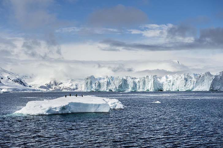 antarktikanin penguenleri 2