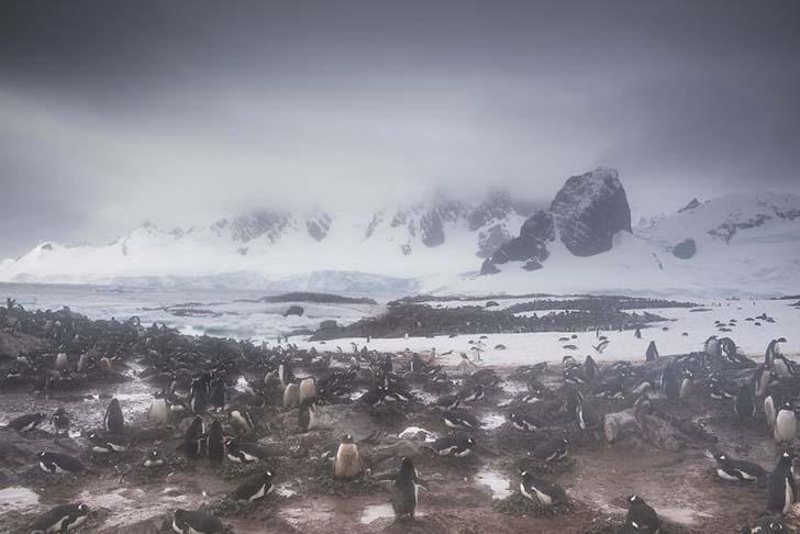 antarktikanin penguenleri 3