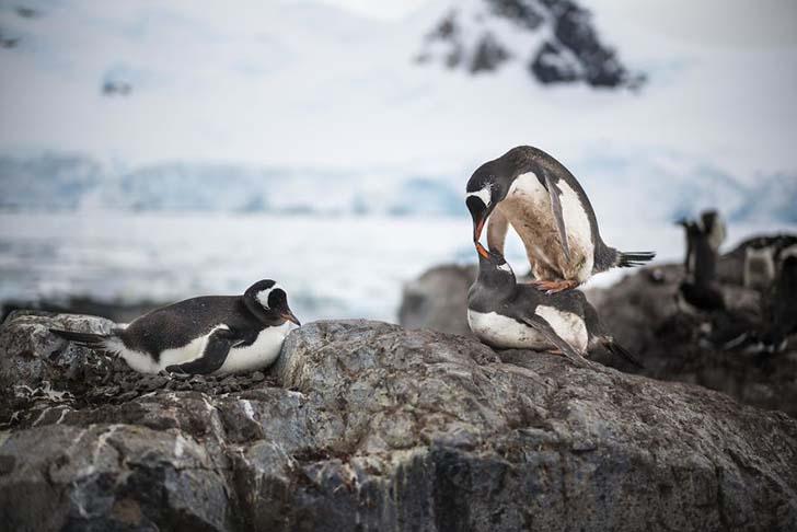 antarktikanin penguenleri 4