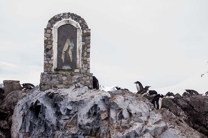 antarktikanin penguenleri 7