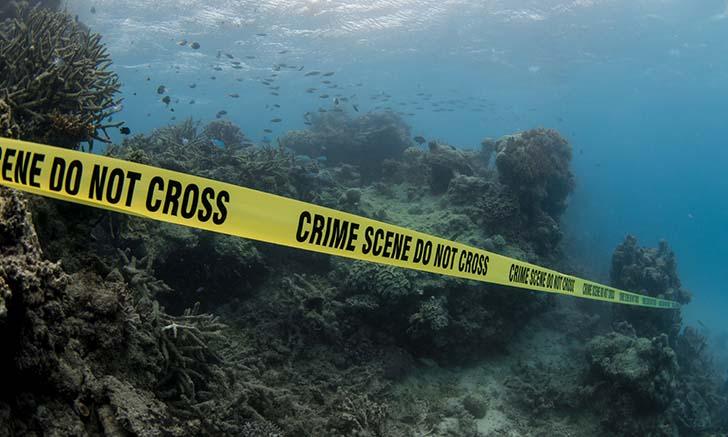 exxon-knew-reef