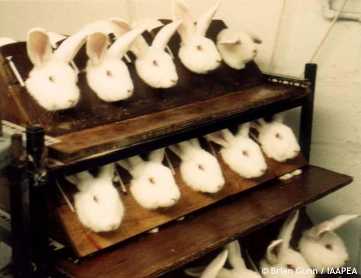 hayvan-deneyleri-sessiz-cigliklar