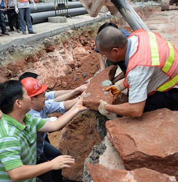 İnşaat işçileri tesadüfen, 43 adet fosilleşmiş dinozor yumurtasına rastladılar