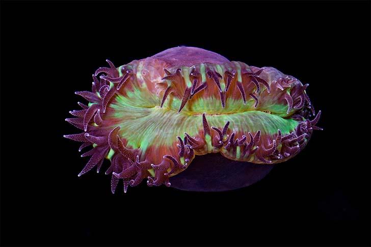 buyuk-resif-mercanlar-2
