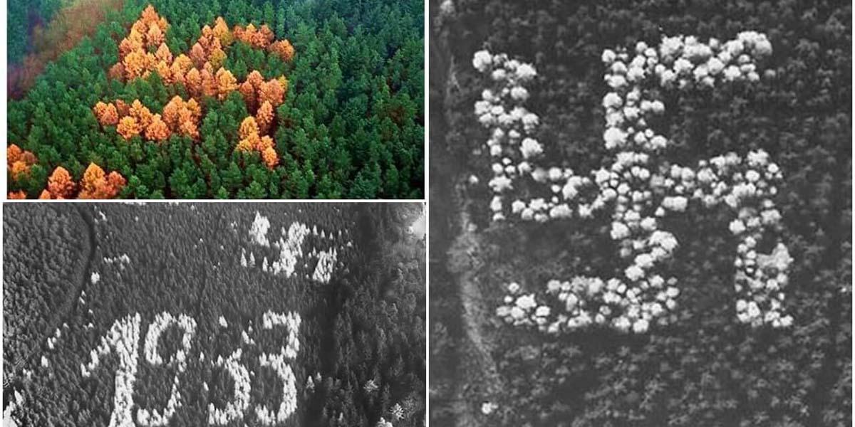 Nazi Doğası: 2. Dünya Savaşı'ndan 1992'ye kadar gizli kalan gamalı haç ormanı