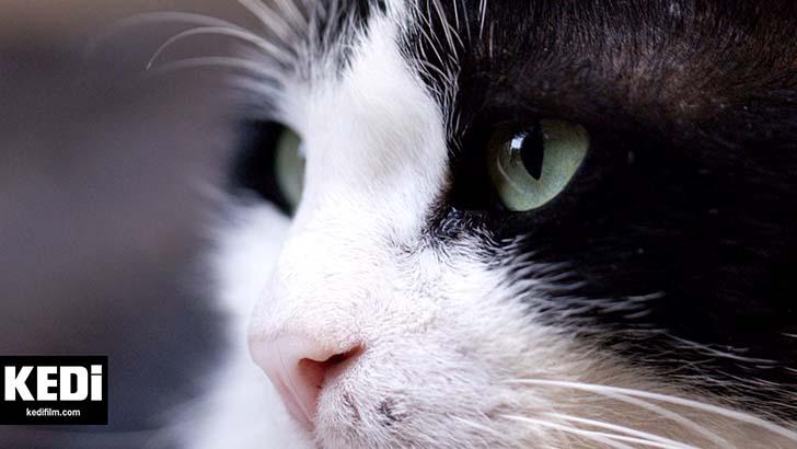kedi-belgeseli-1