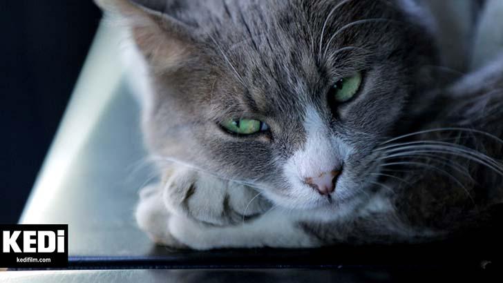 kedi-belgeseli-2