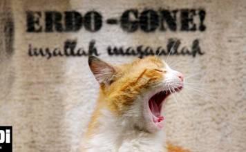 İstanbul'daki sokak kedilerinin sıradışı hayatları: Kedi