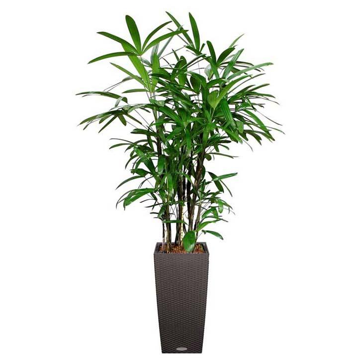 salon-palmiyesi