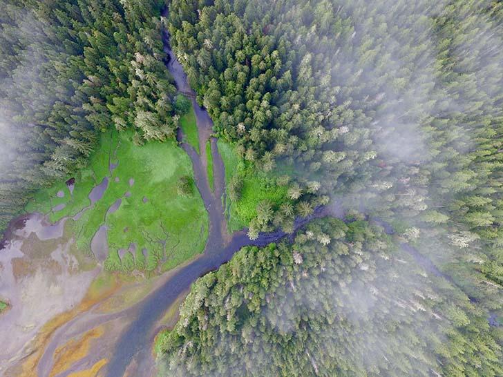 İlk halkların 13bin yıldan daha uzun bir süredir orman yetiştirmesi