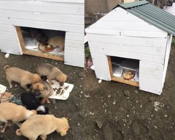 Bakü'de sokak köpeklerine kulübe sağlayan şirket