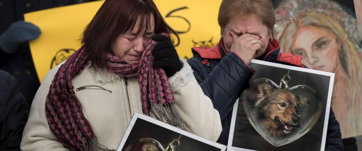 Litvanya'da insanlar işkence edilerek öldürülen köpek Moby için toplandılar