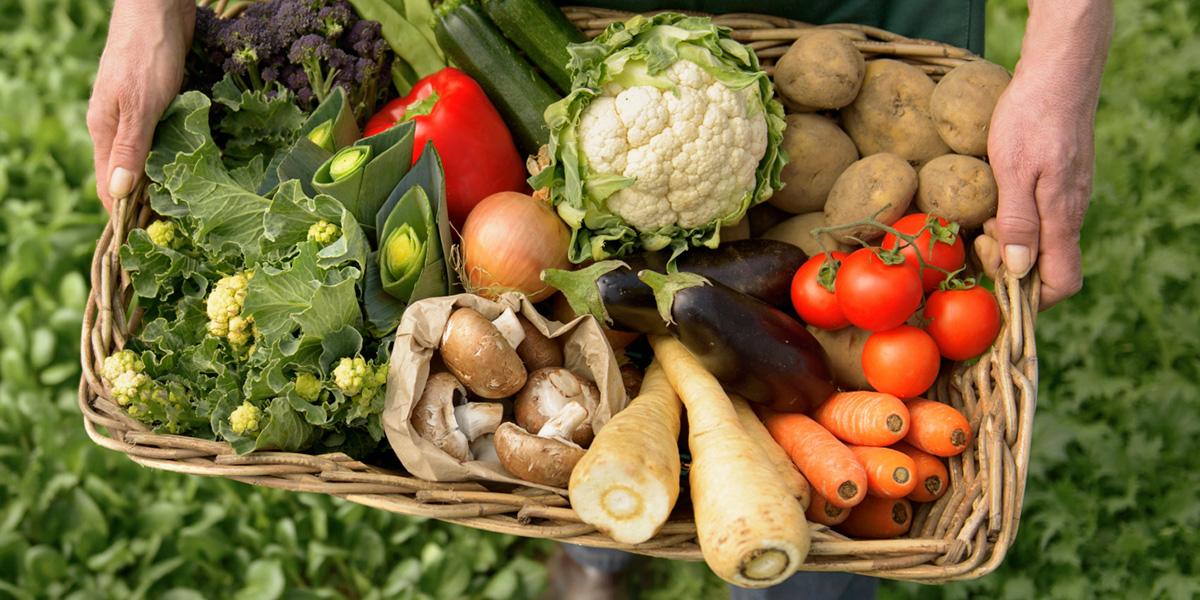 Ekolojik tarım neden ekolojik? - 1 Yerel ve organik gıdaları neden tercih etmeliyiz?