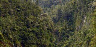 Whanganui Nehri