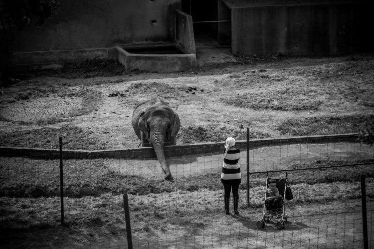 hayvan hakları