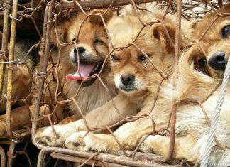 Yulin köpek eti festivali geçici olarak (!) yasaklandı