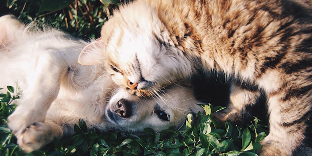 Hayvanları neden barınaklardan sahiplenmelisiniz?