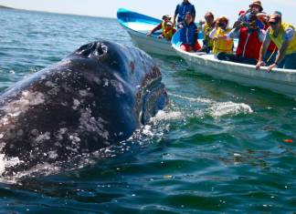 Kitle turizmi deniz canlılarını tehdit ediyor