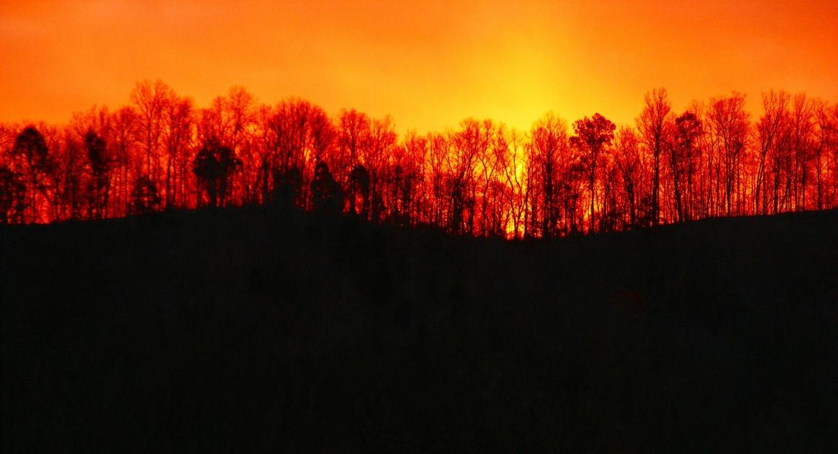 Kazdağları ve Kemer'de kundaklama şüphesi, Dersim'de binlerce hektar yok oldu: Ormanlara sahip çıkın!