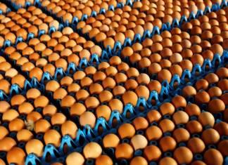 Zehirli yumurta 40 ülkeye yayıldı, içlerinde Türkiye de var: AB bakanları toplanıyor