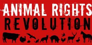 En çok kullanılan 12 hayvan hakları efsanesi ve gerçekleri